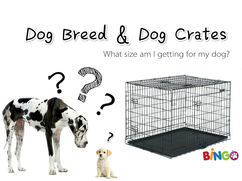 Dog Crate Size Choosing Guide